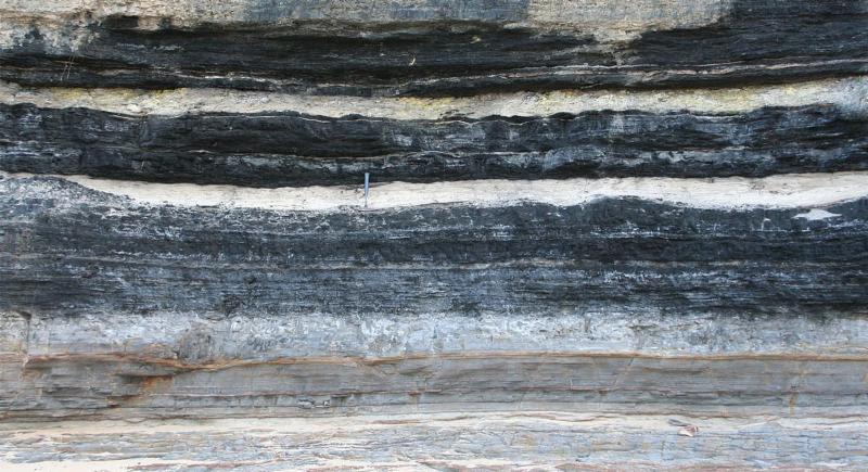क्लाइमेट चैंपियन' फंसा कोयले और गैस की जाल में