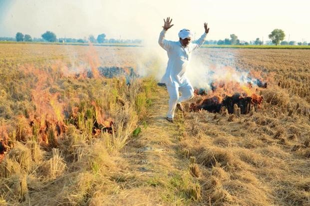 पाबंदी के बावजूद खुंटी जला रहे पंजाब, हरियाणा और यूपी के किसान