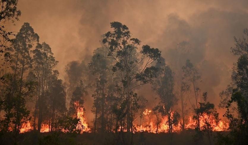 ऑस्ट्रेलिया: भयानक गर्मी और जंगल में फैली आग, आपातकाल घोषित