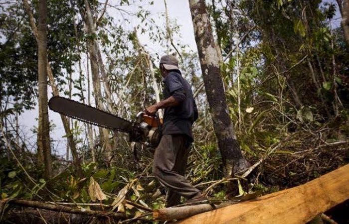 मध्य प्रदेश में लॉकडाउन के दौरान वन क्षेत्र में काटे गये पेड़