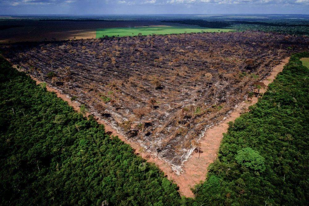 ब्राज़ील के राष्ट्रपति ने बढ़ाई अमेज़न की मुश्किलें