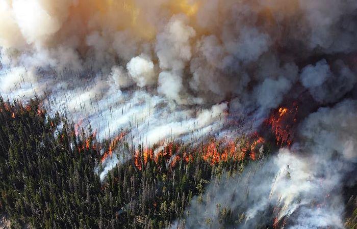 जंगल जलवायु परिवर्तन के कारक बन रहे हैं!