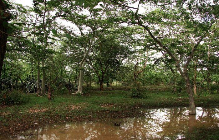 संरक्षित वनों को खनन के लिये खोलने की तैयारी
