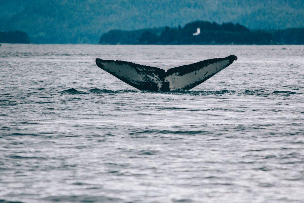 इंसानी हरकतों से उत्पन्न ध्वनि प्रदूषण करता है समुद्री जीवन को प्रभावित