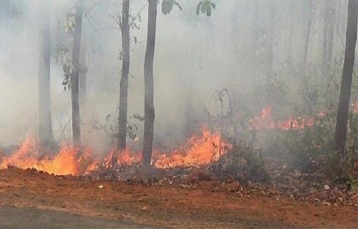 सिमलीपाल जंगल में लगी आगः वन विभाग या वनवासी, कौन है जिम्मेवार?