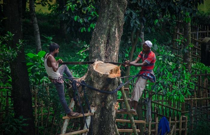 सोलह राज्यों ने की वन विभाग के बजट में कटौती