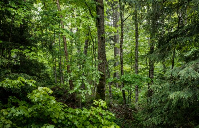 भारतीय वन कानून में फिर बदलाव की तैयारी