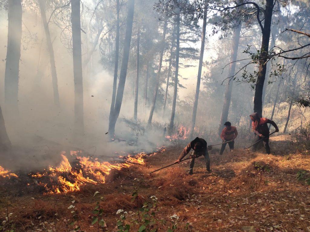वनों में आग की बढ़ती घटनायें और बदलता ग्राफ