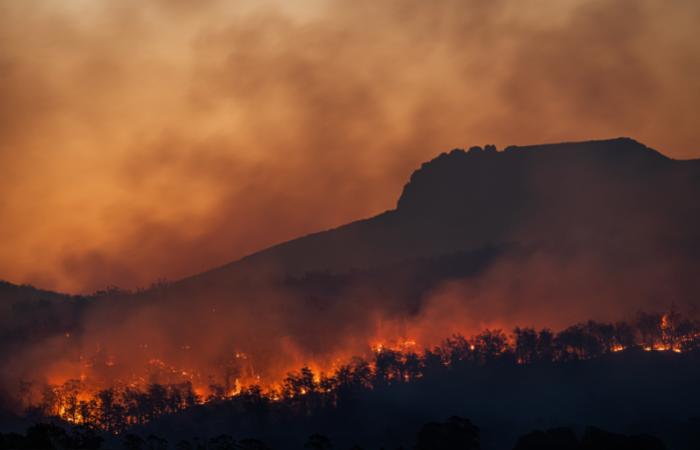 पराली नियंत्रण: सरकार बायोमास को जलायेगी कोयला बिजलीघरों में