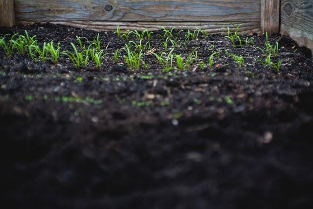 बढ़ते तापमान और ओजोन से हो रहा है पौधों को नुकसान