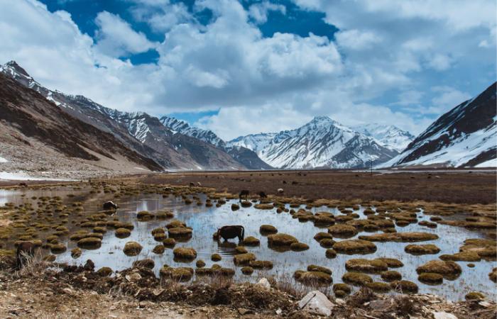 बढ़ते तापमान के कारण लद्दाख की जांस्कर घाटी में पीछे हट रहे हैं ग्लेशियर