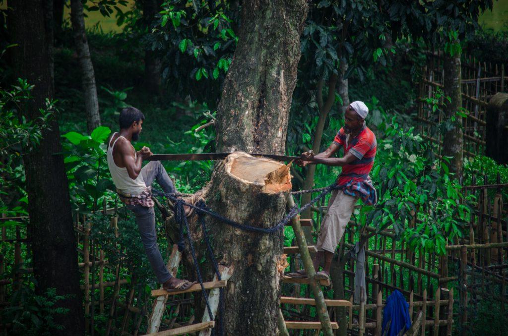 पूरे देश में जंगलों पर चौतरफा हमला